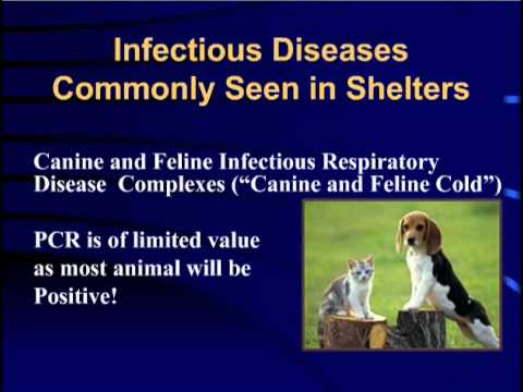 Schultz 2013 Webcast: Cracking the Infection Control Code