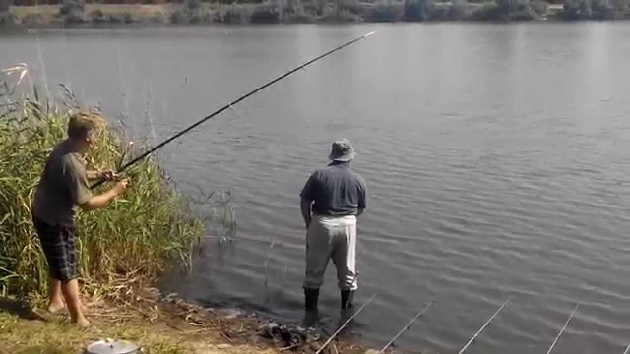 ловля амура и толстолобика видео