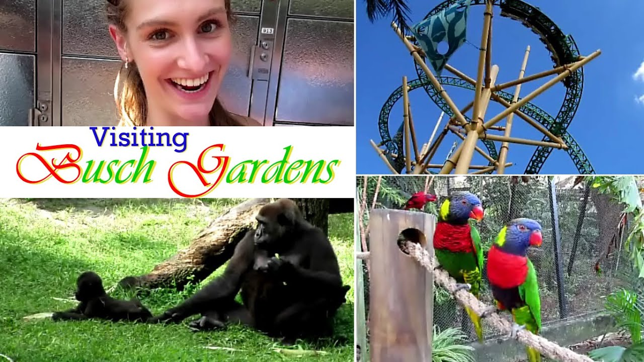 Visiting busch gardens andthenifellinlove vlog youtube What time does busch gardens close today