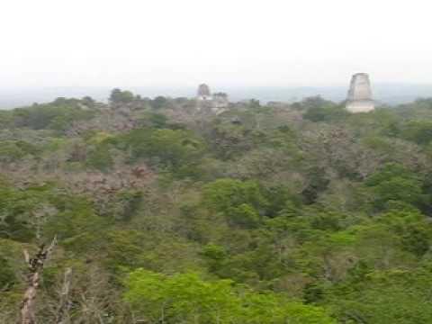 Tikal ruins at dawn - Howler Monkeys , GUATEMALA
