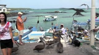 Галапагосские Острова. 2012 год: Первый день на Галапагосах