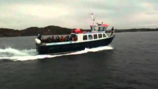 Gambar cover Dolphins bow riding with Staffa Tours