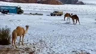 """مع """"الشتاء حولك"""" كل من في السعودية سيتزلج على الجليد ج 1 صحيفة هتون"""