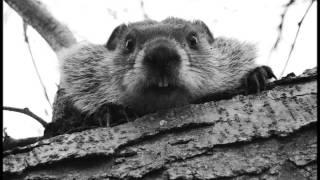 Nosferatu - Beaver Cleaver (HD)