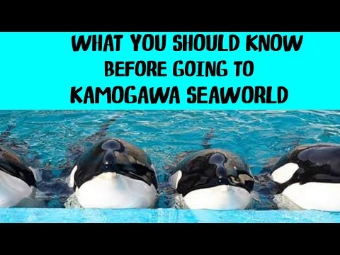 What Kamogawa SeaWorld Doesn't Want You To Know