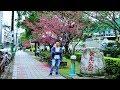 [桃園旅遊景點] 教你搭公車到中壢莒光公園,走一圈小橋、流水和櫻花