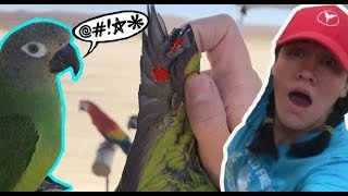 VET ABUSE BIRD AND CLIP BIRDS WINGS WITHOUT PERMISSION! *clipping bird wings is animal cruelty*