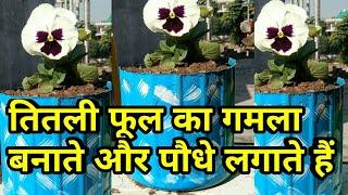 तितली फूल का गमला बनाते और पौधे लगाते हैं, how to plant Pansy flower, winter flower reporting
