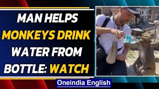 Monkeys drink water from a bottle, man's act of kindness goes viral| Oneindia News