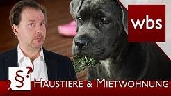 Darf ich Tiere in der Mietwohnung halten? | Rechtsanwalt Christian Solmecke