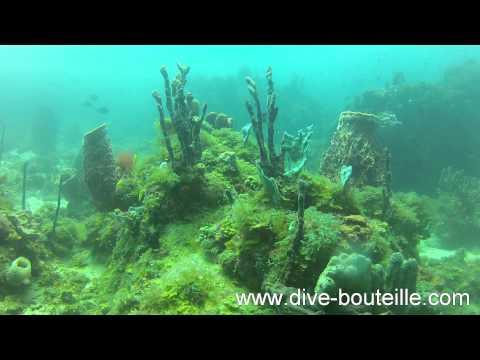 Plongée au Pain de Sucre - Les Saintes - Guadeloupe