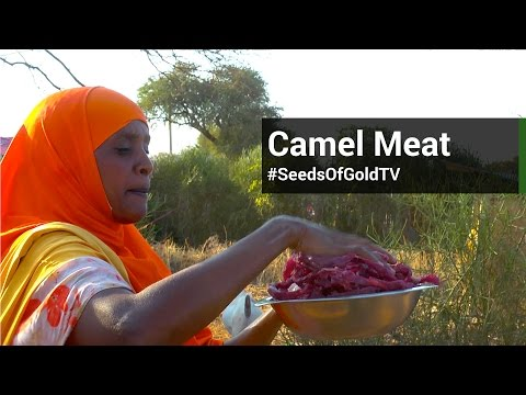 Camel Meat & Breeding - Seeds Of Gold TV Season 1 Episode 12