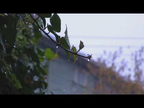 Шум дождя и грома для глубокого сна и отдыха| 2 часа| Звуки природы