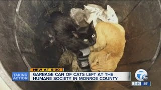 Garbage can of cats, kittens left outside Humane Society in Monroe County
