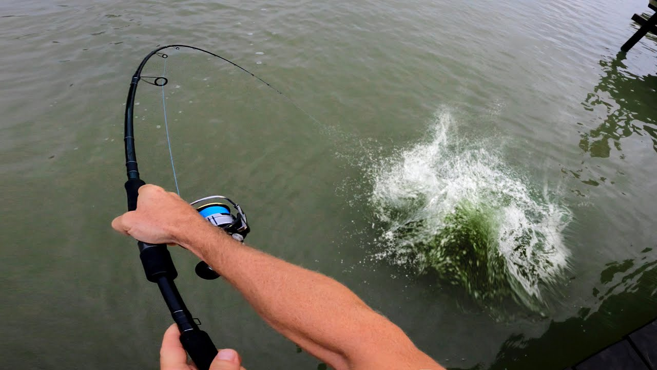 MONSTER FISH in DIRTY WATER Fishing Madness!!