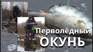 Секреты ловли ПЕРВОЛЁДНЫХ ОКУНЕЙ! Первый ЛЁД на заливе реки - Болен Рыбалкой №576