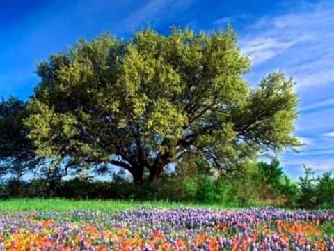 песня Какого цвета лета?