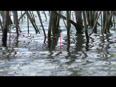 Килограммовые караси на поплавок. Весь карась стоит в кустах. Рыбалка 2020