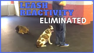 Leash Reactivity Eliminated In Seconds