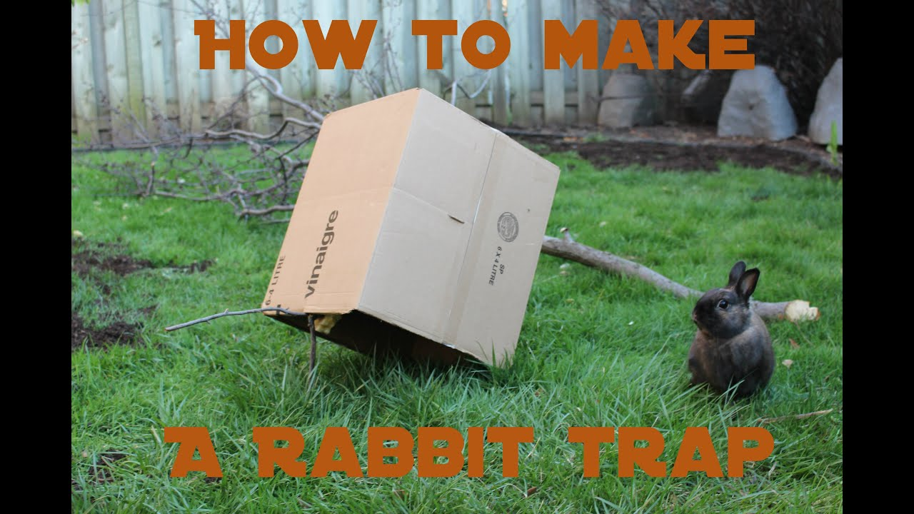 how to make a humane rabbit trap youtube
