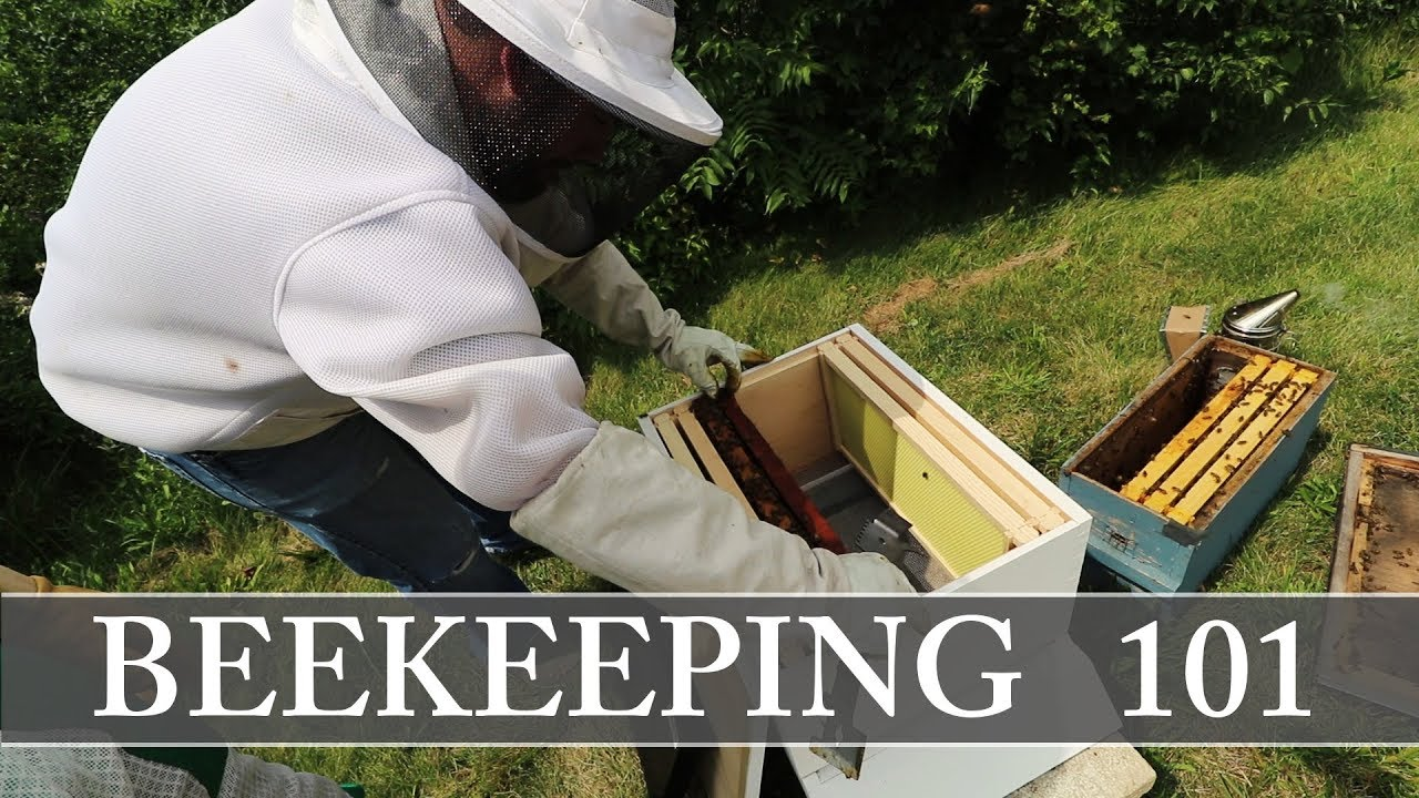 How To Install A Nuc - I Got Bees  - Beekeeping 101 - Crash Course - Starting A Beehive