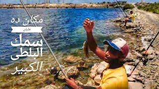 مذبحه صيد سمك البلطي الكبير ثاني أيام العيد مكان ده مليان سمك وطريقه صيد سمك القاروص بلحيا