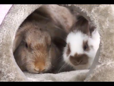 Кролики - как с ними играть?