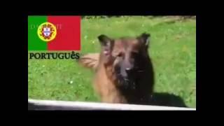 Как лают собаки в разных странах мира