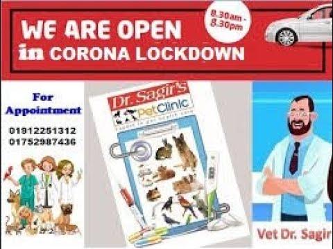 Vet in Dhaka City Pet Doctor in Bangladesh @ Dr. Sagir's Pet Clinic 01912251312