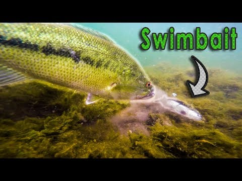 INSANE Underwater Swimbait Fishing!! - Big Bass on Savage Gear Swimbait