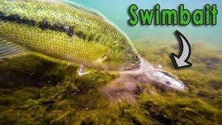 INSANE Underwater Swimbait Fishing!! - Big Bass on Savage Gear Swimbait