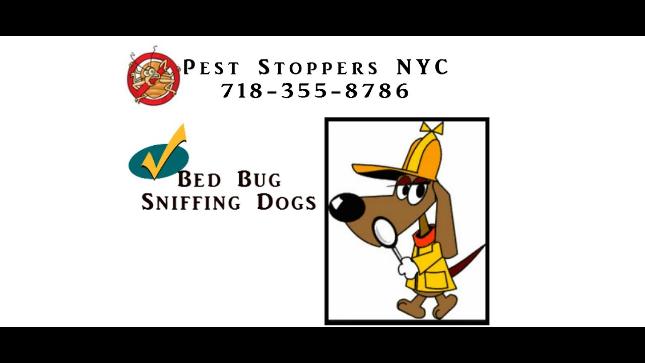 Bed Bug Dogs Bronx NY - Do Bed Bug Dogs Work? - YouTube