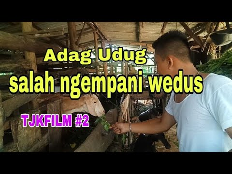 TJK FILM #2   Salah Ngempani Wedus