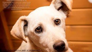 Глаза собаки, что лишилась дома. Приют Дари добро. the owner threw the puppy... onely dog eyes