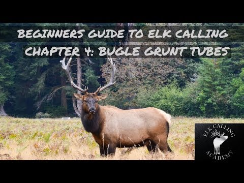 Valuable Advice for Selecting the Top Bugle Grunt Tube