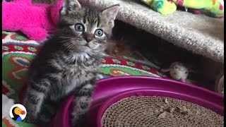 Wobbly Kitten LOVES Her BLIND Cat Siblings | The Dodo