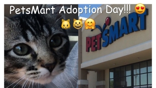 PetsMart Adoption Day!!🐱😺 VLOG!!!