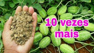 Esse adubo espetacular faz qualquer planta produzir 10 vezes mais !!