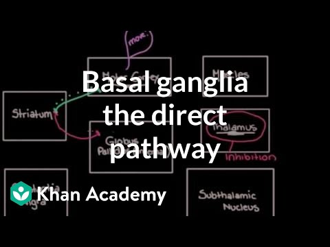 The basal ganglia - The direct pathway | Nervous system diseases | NCLEX-RN | Khan Academy