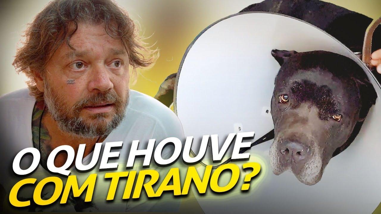 O TIRANO FOI PARAR NO HOSPITAL!   A CASA DOS BICHOS
