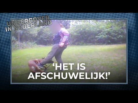 SCHOKKEND! Politiehonden worden mishandeld door hun trainer… | Undercover in Nederland