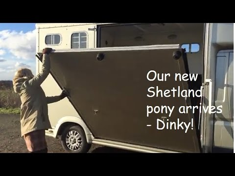 Our new Shetland pony arrives - Dinky! TV 114