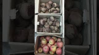 경동 건강원 비트 사과 한솥 올립니다