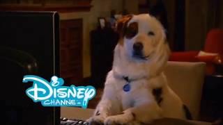 Disney Channel Bumper: Dog with a Blog