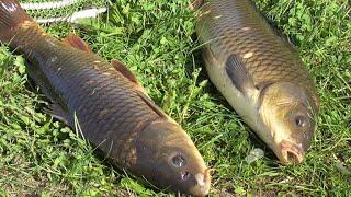 Рыбалка на сазана с ночевкой в мае Сазан украл фидер