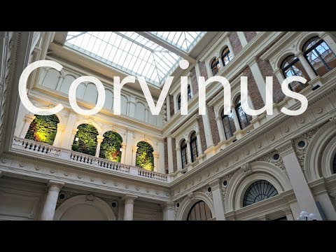SNEAK PEAK IN CORVINUS UNIVERSITY | Budapest