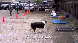Off Leash Dog Training Class By The Dog Squad Oakland, Ca