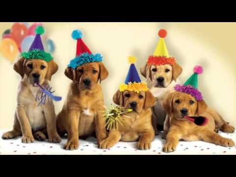 Cute Dogs Bark The Happy Birthday Song