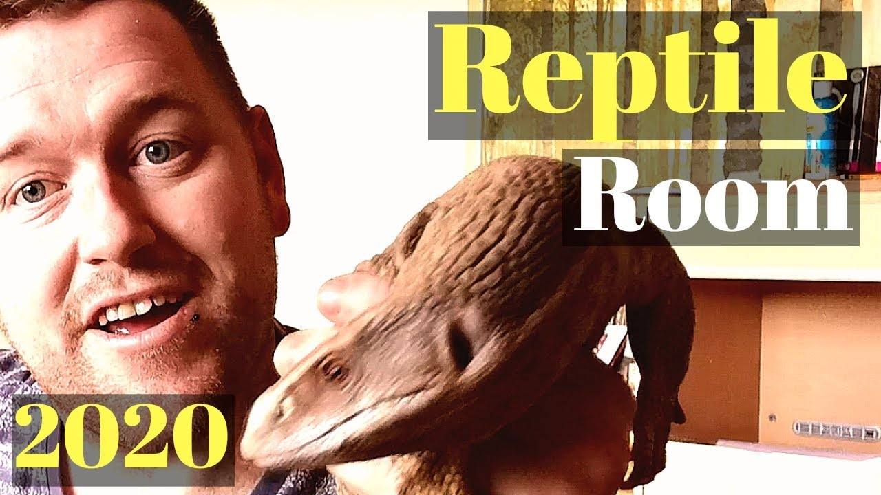 Reptile Room Tour January 2020 ( All My Pets In One Video)