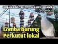 Lomba Perkutut Lokal Gacoran Piala Gbph Yudaningrat Yogyakarta Suara Burung Perkutut Lokal  Mp3 - Mp4 Download